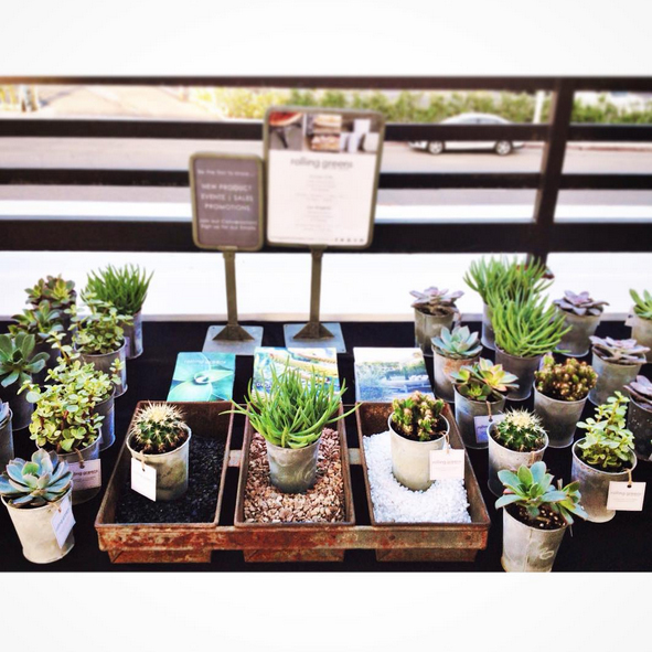 Pots and Plants Find a Sunny Spot on Rise Nation's Patio
